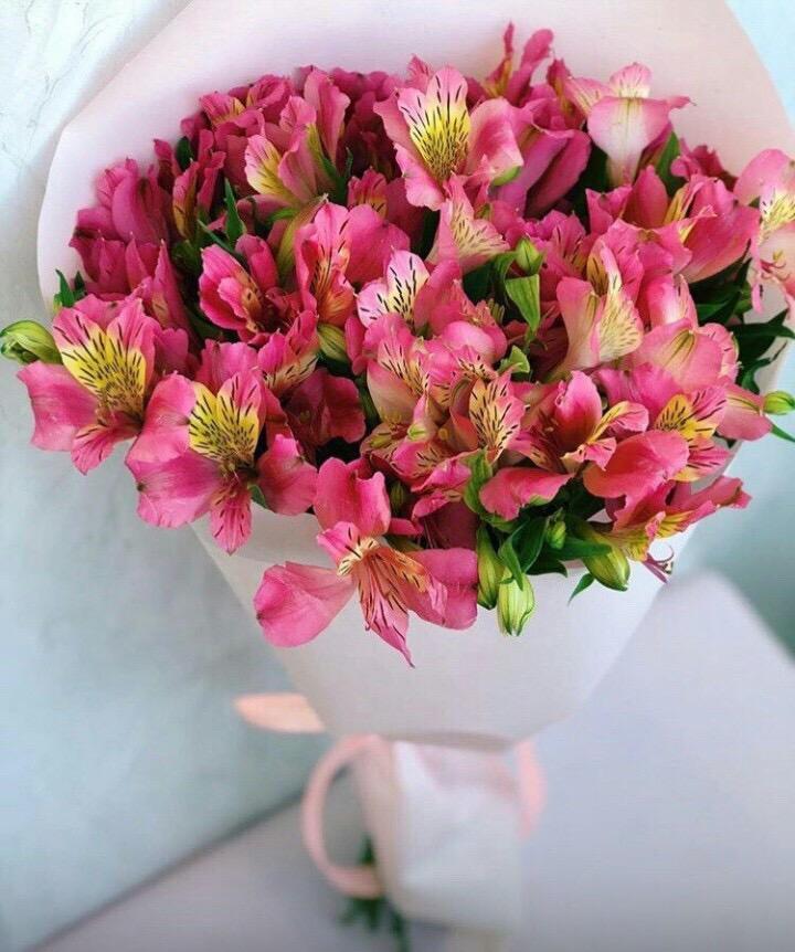 Цветы интернету, цветы альстромерия в букете значение